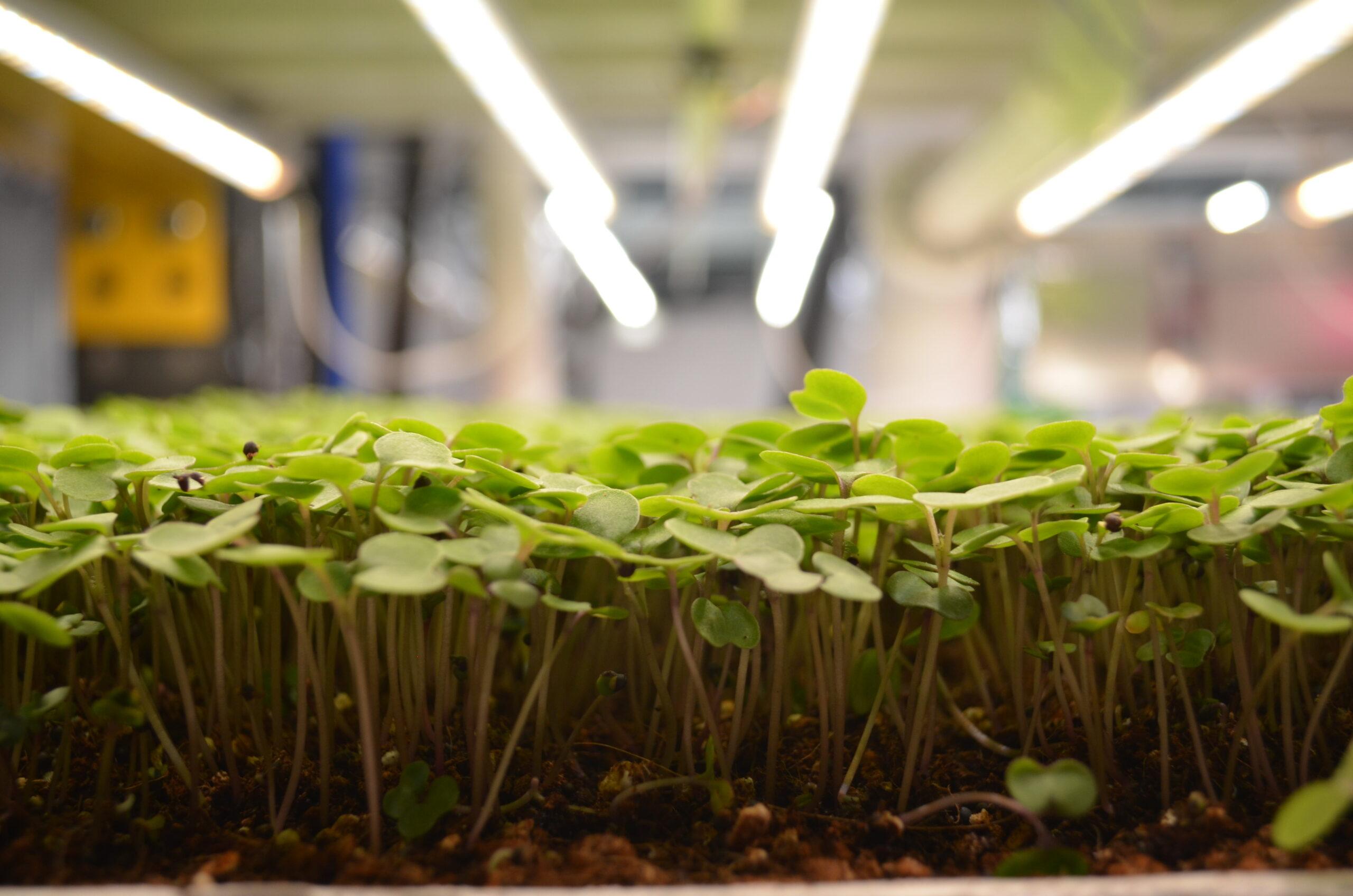 生態系を維持するアクアポニックス農法で魚と野菜を同時に育てるUpward Farm社について解説