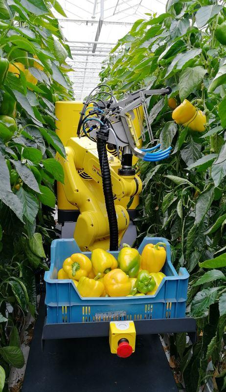 温室内での作物収穫ロボットを開発し温室農業の労働力不足を解決するSWEEPERについて解説