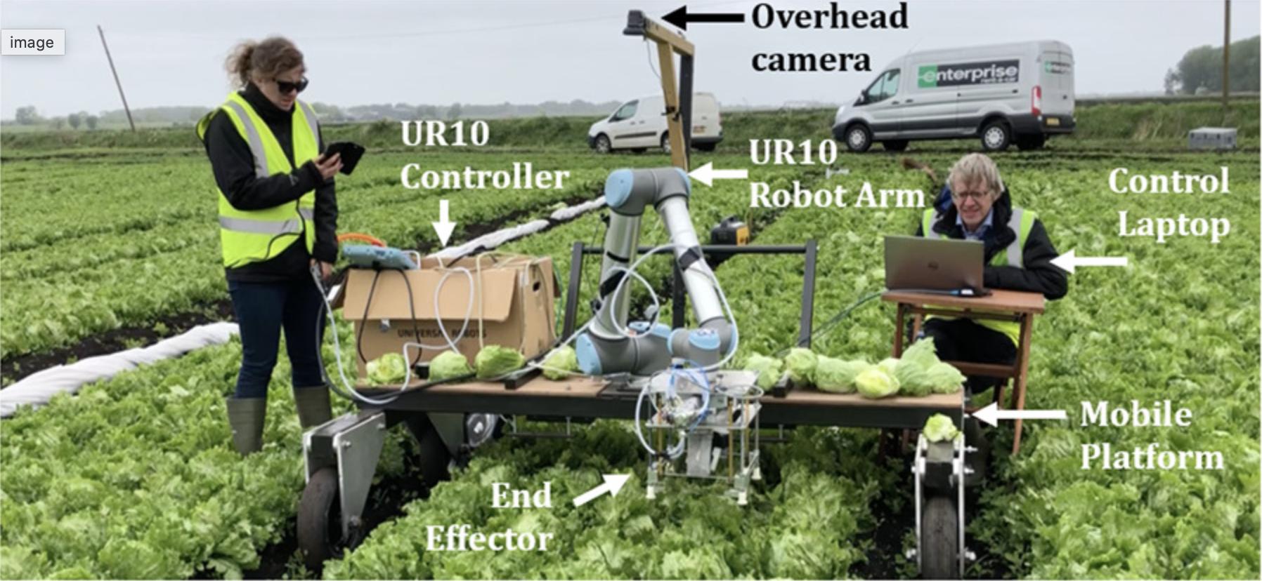 収穫の適期を自動で判断し、97%のレタスを自動収穫するシステムの開発に成功