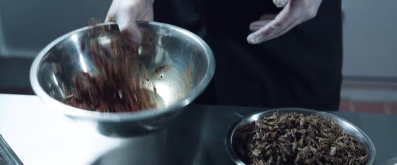 高タンパク質のコオロギの粉末でプロテインバーを製造するExoについて解説