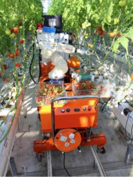 チェリートマトを房ごと収穫する、自動収穫ロボットの研究