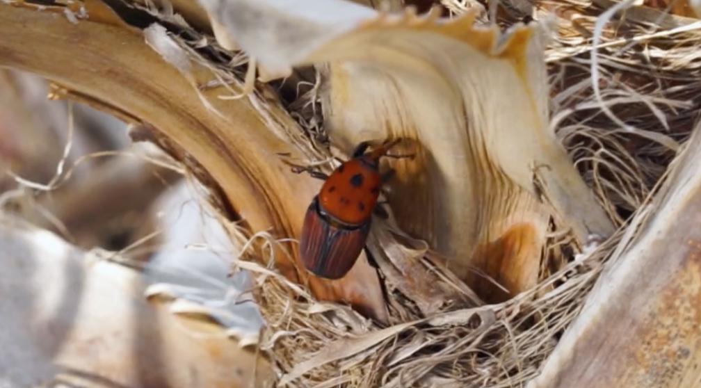 巨大イモムシの食害からヤシの木を守る。Agrintのワイヤレス害虫センサーIoTree