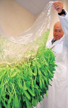 病原や汚染を通さないハイドロゲル膜を使ったフィルム農法「アイメック」を開発した日本の農業ベンチャー、メビオール社について紹介