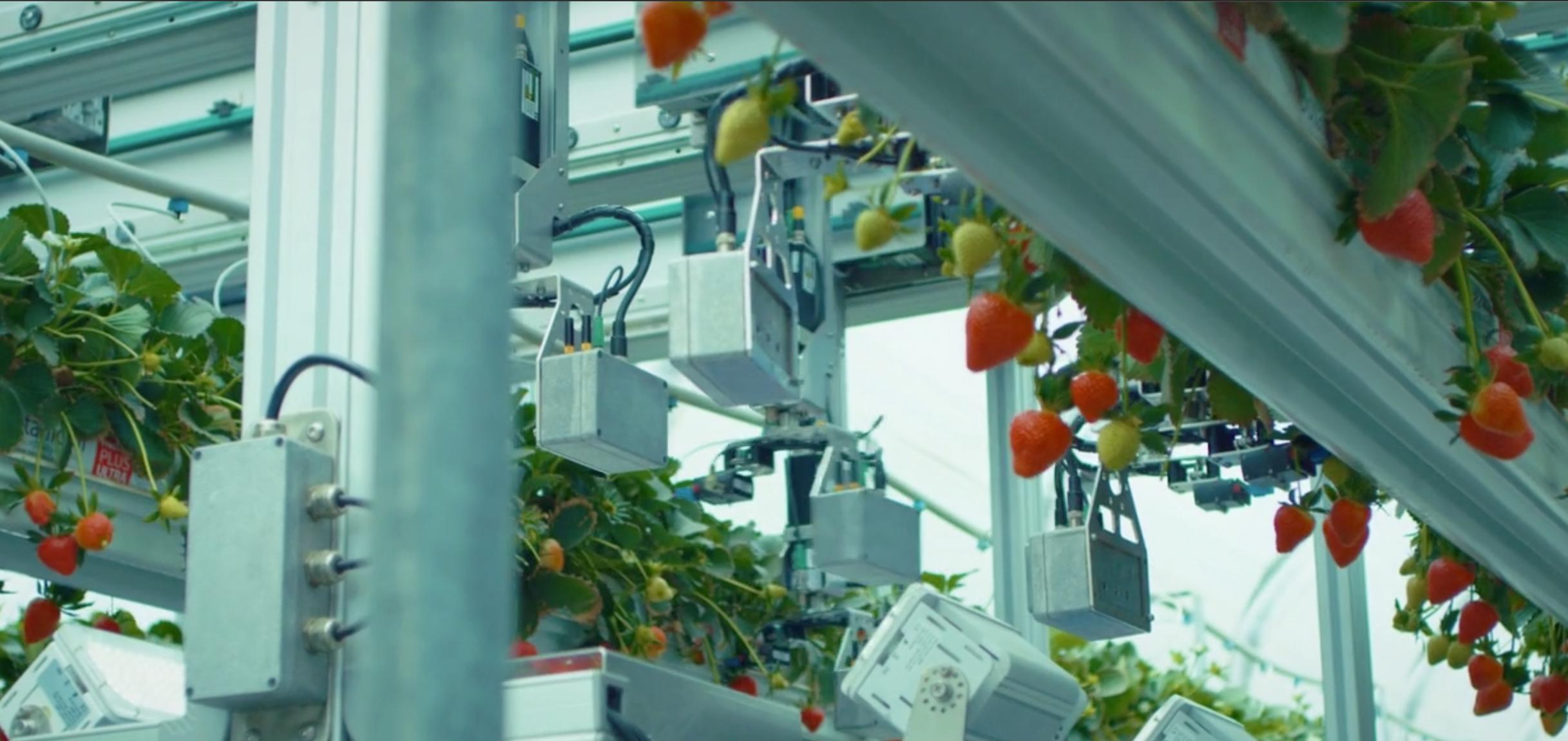 摘み取るイチゴをAIで判別し傷つけずに収穫できる、AGROBOT社のロボットEシリーズについて解説