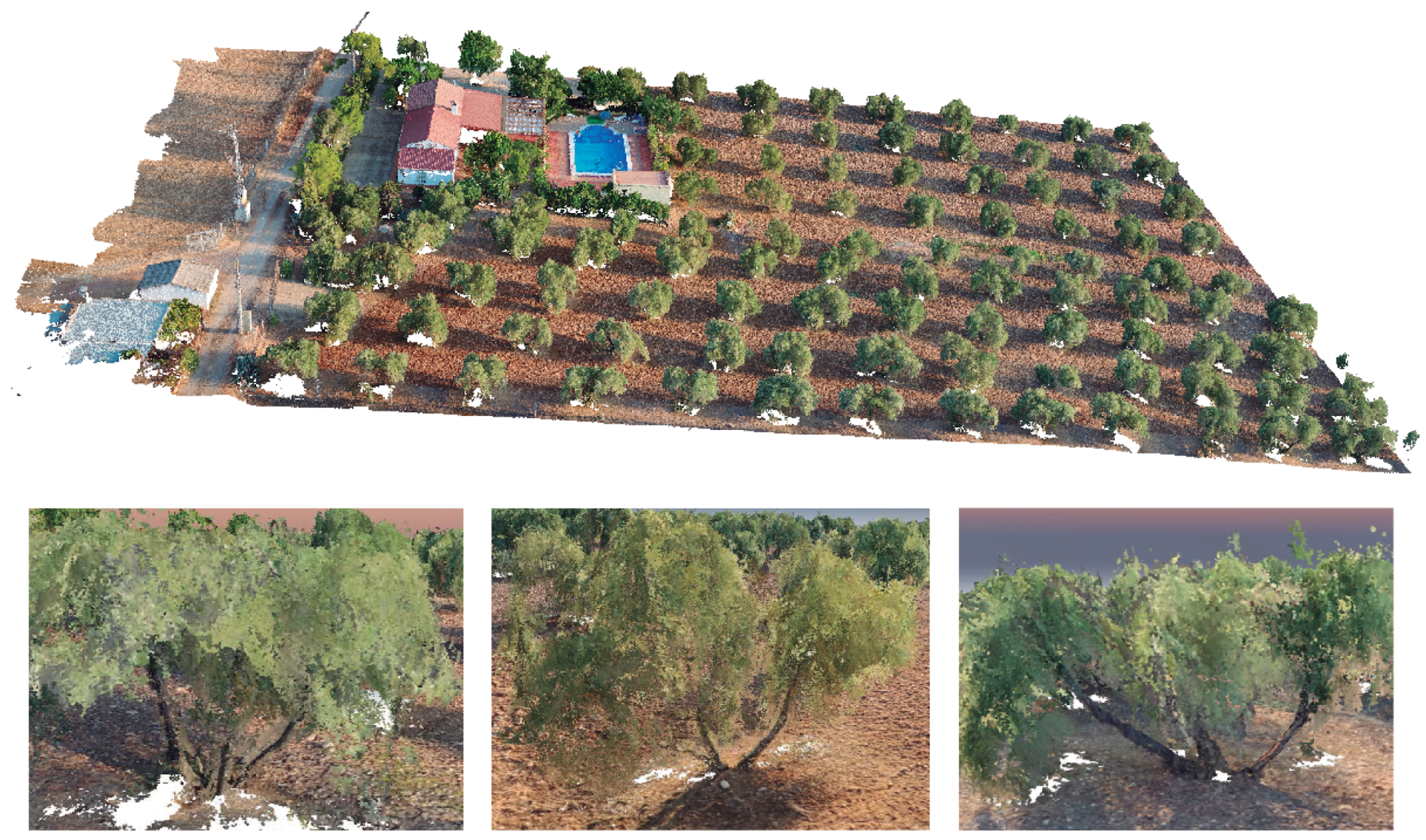 スペインで開発されたドローンにより、オリーブ樹の生育を管理するシステム