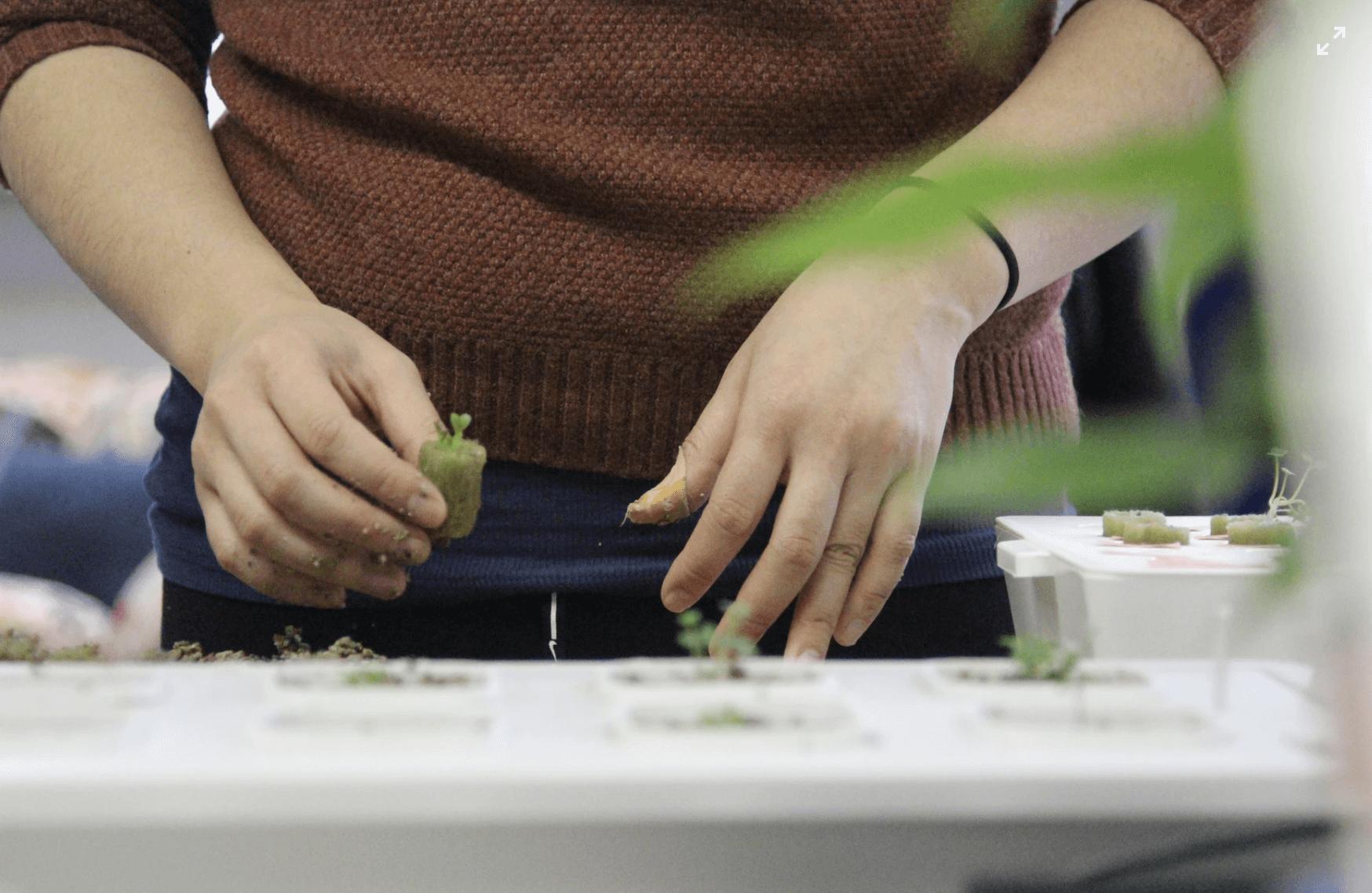 植物工場とは?植物工場の種類や良い点について解説