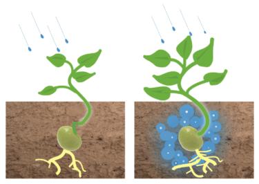 環境に優しい超吸収性土壌添加剤であるハイドロゲルを製造・販売するCarbon Neutral Ag Sciences社について解説