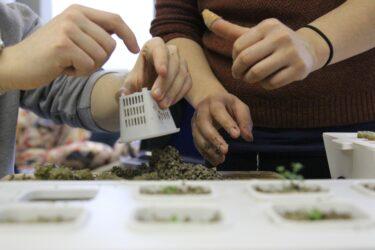 水耕栽培とは?土耕栽培との違いや栽培可能な作物について解説